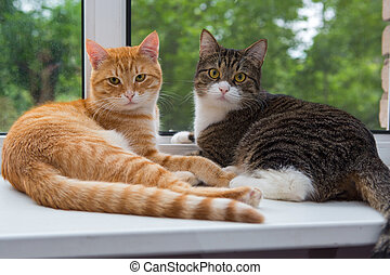 Two cat sitting on the window sill - Red and grey cat ...