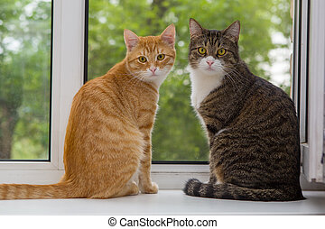 Two cat sitting on the window sill - Red and grey cat...