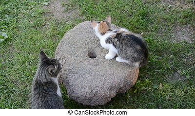 two cats and old millstone in garden