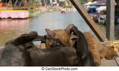 Two Cats are Played with each other Lying on a Wooden Pier in the Floating Pattaya Market. Thailand