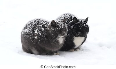 two cats are sitting on the snow in time of blizzard, pets,...