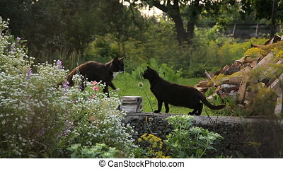 Two cats at the backyard of a coutryside household