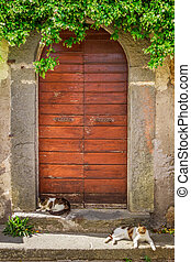 Two cats basking in the sun at the door