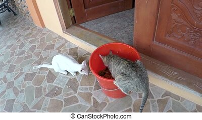 two cats eating leftover food from pail