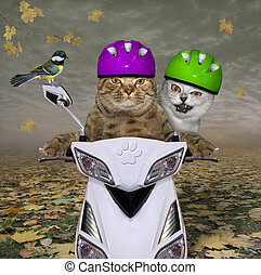 Two cats have fun on moped 2