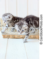 Two cats in a basket