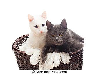 two cats in a wicker basket