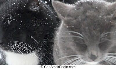 two cats in the winter among the snowy wasteland, pets, bad...