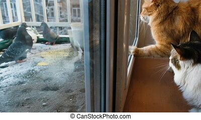 Two cats looking out the window at the birds, pecking at...