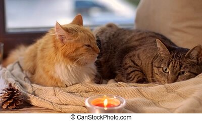 two cats lying on blanket at home window sill - pets,...