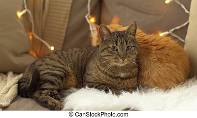 two cats lying on sofa with sheepskin at home - pets,...