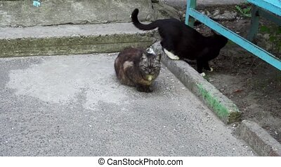 two cats near the entrance of a house