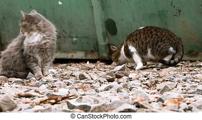 Two cats near trash can, one is sitting and looking around and another exploring for food