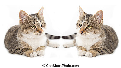 two cats on a white background