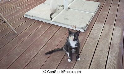 Two cats on wooden plank tile floor - Two cats on a wooden ...