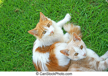 Two cats - Two beautiful cats on the grass.