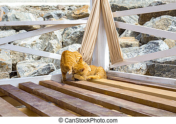 Two cats playing in summer on a beach