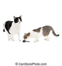 Two cats playing with a toy mouse