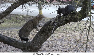 two cats singing on apple tree