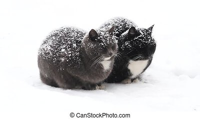 two cats sit powdered with snow, pets, bad weather and frost