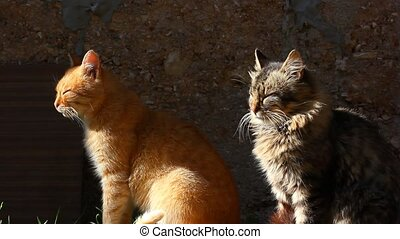 two cats sitting and looking