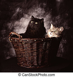 Two Cats Sitting In A Basket