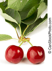Two Cherries and branch with leaves