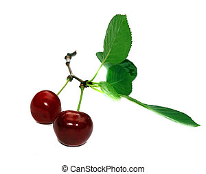 Two cherries on a branch with leaves isolated