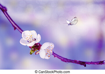 two cherry flowers on a branch, close-up, spring background with butterflies