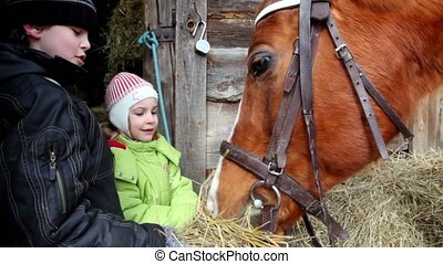 Two children boy and girl feed horse, closeup view