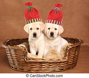 Two Christmas puppies