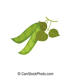 Two closed pea pods. Vector illustration on white background.