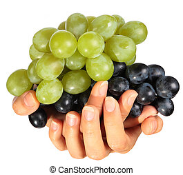 Two clusters of ripe grapes lie in female hands isolated on the white background