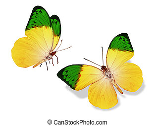 Two color butterflies Drawing | csp23365030