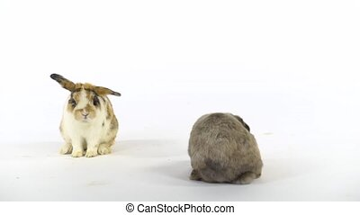 Two colored rabbits are playing at white background at studio. Slow motion