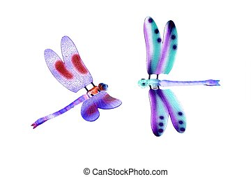 two colorful dragonfly flying insects isolated over white