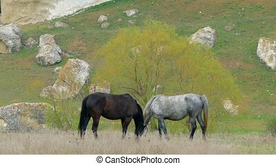 Two colorful horses eat grass with their heads bowed. The...