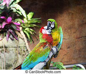 two colorful parrots are sitting on the branch of a tree and kissing
