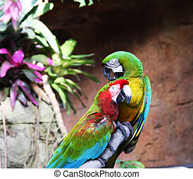 two colorful parrots are sitting on the branch
