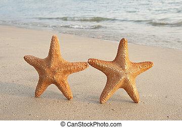 two colorful seastars sitting on beach