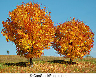 Two colorful Trees