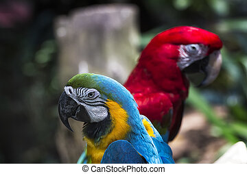 Two Colorful Tropical Parrots