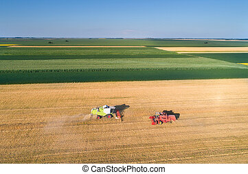 Two combine harvesting wheat field