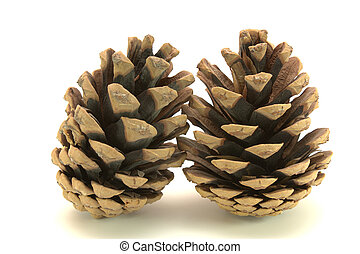 two cones from pine-tree on the white background