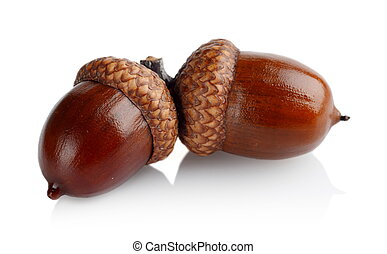 Two connected acorns isolated on white background - Couple...