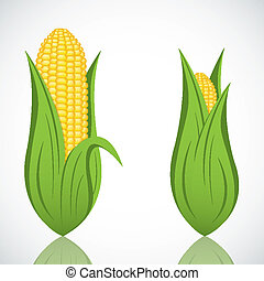 Two corn with leaf