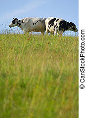 Two cows are standing on a green meadow