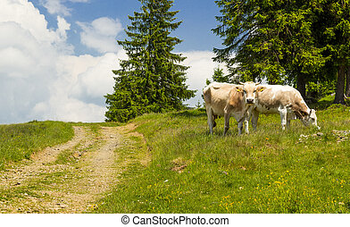 Two cows grazing on a green meadow