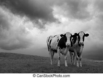 Two cows set against a moody black and white landscape