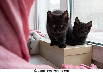 two cute black kitten sitting on a box on the windowsill